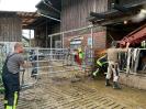 Abklärung Tierrettung_6