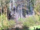 Waldbrand Reidermoos 13.4.17_1